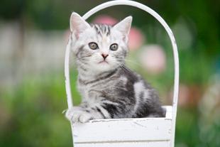 子猫のワクチネーション